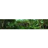 05 25 51 72 rainforest through the long lens 4 4