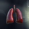 05 27 40 297 lungs1 daz 4