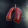 05 27 41 721 lungs2 daz 4