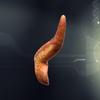 05 27 49 513 pancreas4 daz 4