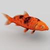 05 33 23 474 koi fish c 4