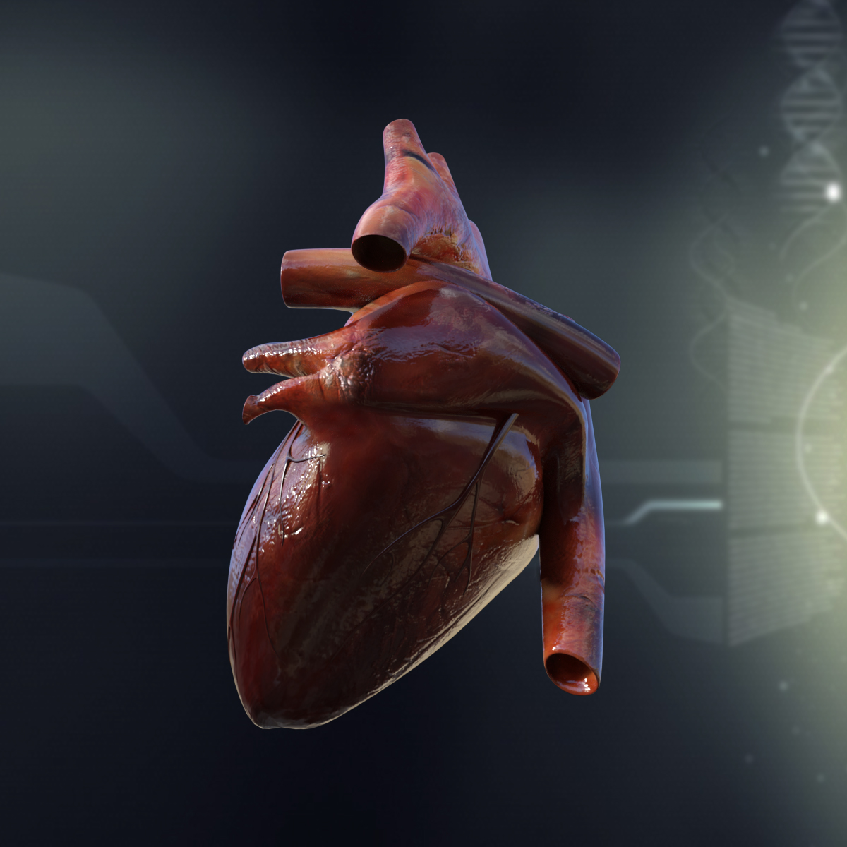 3d anatomy of heart