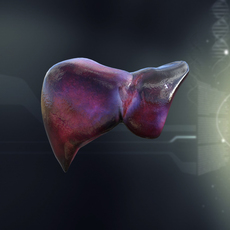 Human Liver Anatomy 3D Model