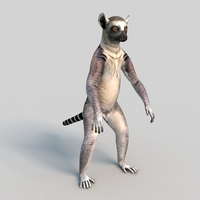Ring Tailed Lemur 3D Model