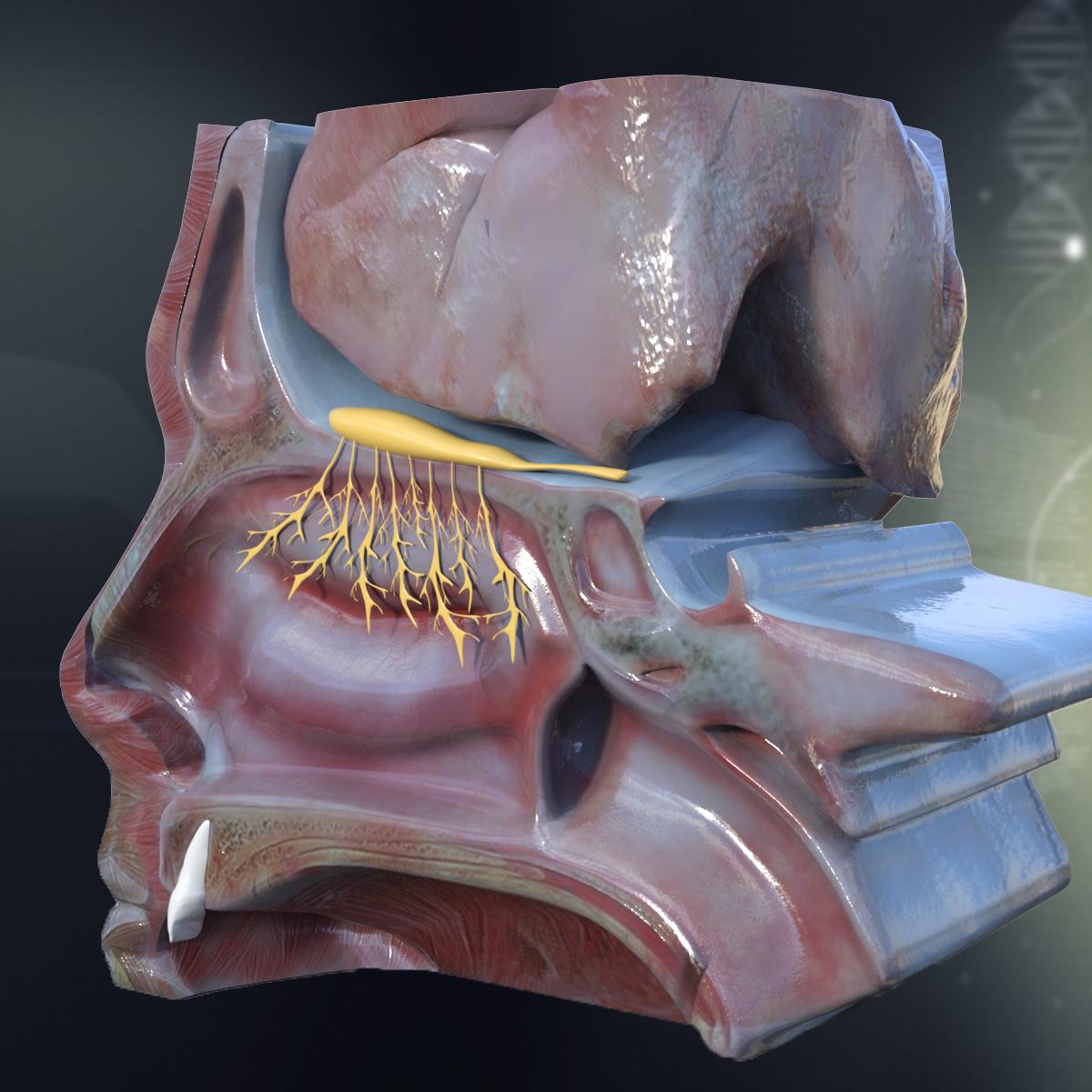 Online 3d anatomy