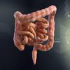07 40 29 953 intestine2 daz 4