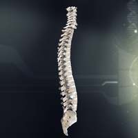 Human Spinal Anatomy 3D Model