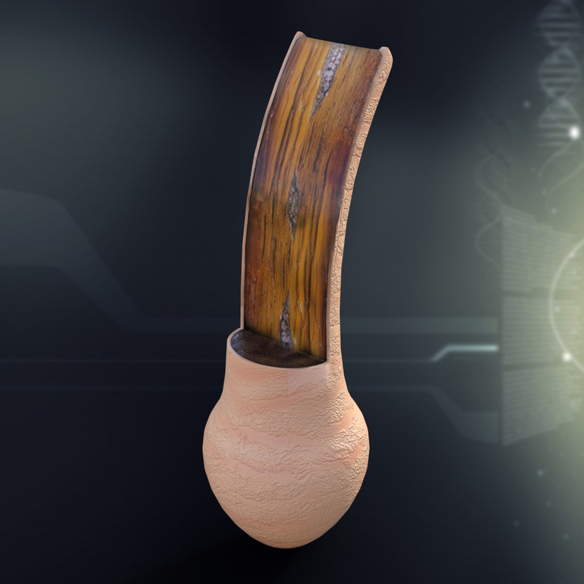 Human Hair Anatomy 3D Model