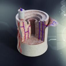 Human Bone Anatomy 3D Model
