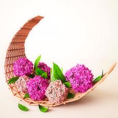 Pink flowers 3D Model