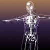 Skeleton of Human in Body 3D Model
