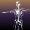 09 33 03 271 human skeleton bones 3d model free 4