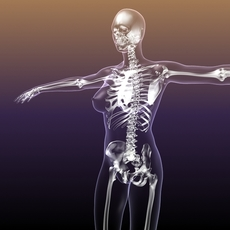 Female Skeleton in transparent Woman Body 3D Model