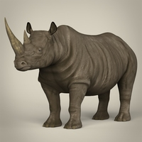 Realistic Rhinoceros 3D Model