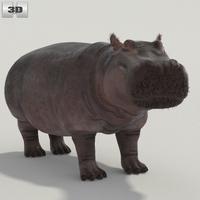Hippopotamus High Detailed Rigged 3D Model