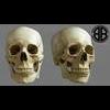 11 03 20 543 skull final copyright 00 4