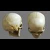 11 03 22 86 skull final copyright 01 4