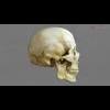 11 03 22 985 skull final copyright 02 4