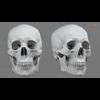 11 03 27 564 skull final copyright 04 4