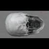 11 03 28 248 skull final copyright 11 4