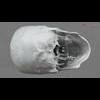 11 03 29 11 skull final copyright 07 4