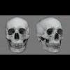 11 03 29 770 skull final copyright 08 4