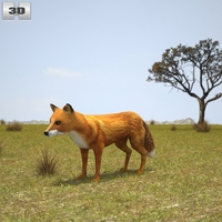 European Red Fox 3D Model
