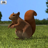 American Red Squirrel 3D Model