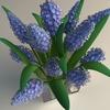 11 56 46 336 bouquet5 6 4