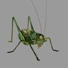 12 05 11 336 grasshopper01 4