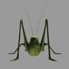 12 05 24 561 grasshopper06 4