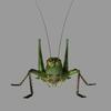 12 05 25 263 grasshopper05 4