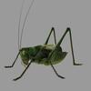 12 05 27 620 grasshopper03 4
