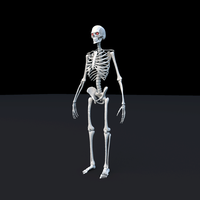 Skeleton Maya Rig for Maya 1.0.0
