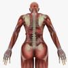 14 36 01 728 humanfemaleanatomy 6.jpgc157ce4d 80c9 42cb bd55 8d9d8b099b2boriginal 4