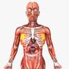14 36 27 601 humanfemaleanatomy 2.jpg4c64e196 0531 47af 94c0 50e330b629b8original 4