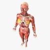 14 36 28 435 humanfemaleanatomy 4.jpga1a93879 b10c 46fe 8134 1017d6500eb6original 4