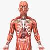 14 36 29 358 humanmaleanatomy 2.jpg9a1bc744 bdde 4235 958b 290db0f666e2original 4