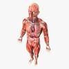 14 36 31 142 humanmaleanatomy 4.jpg20a9e540 3f28 4431 8ecb 8bf2869b2aecoriginal 4