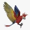 14 58 45 716 parrotdisplaypic1 4