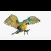 14 58 46 678 parrotbelndpic3455 4