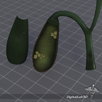 Gall Bladder Anatomy 3D Model