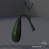 A  of Gall Bladder. 3D Model