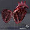 15 03 29 196 dl3d heartdetailed 2 4