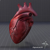 15 03 33 329 dl3d heartdetailed 5 4