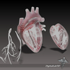 15 03 39 964 dl3d heartdetailed wireframe 4