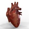15 03 40 838 humanheart 1 4