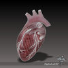 15 03 43 358 dl3d heartex wireframe 4