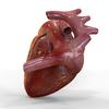 15 03 45 59 humanheart 5 4