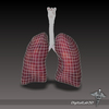 15 09 29 883 dl3d lungs throat wireframe 4